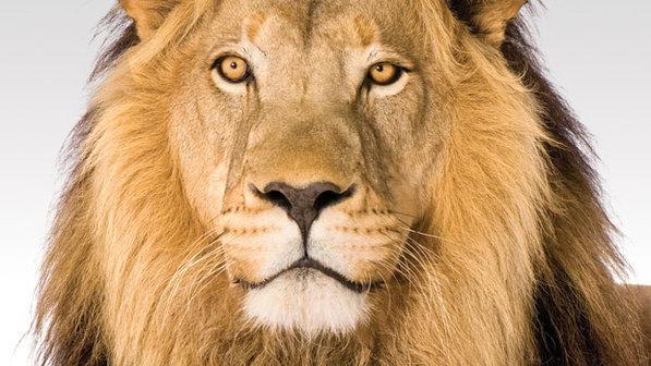 Declarações de Imposto de Renda – hora de acertar as contas com o leão
